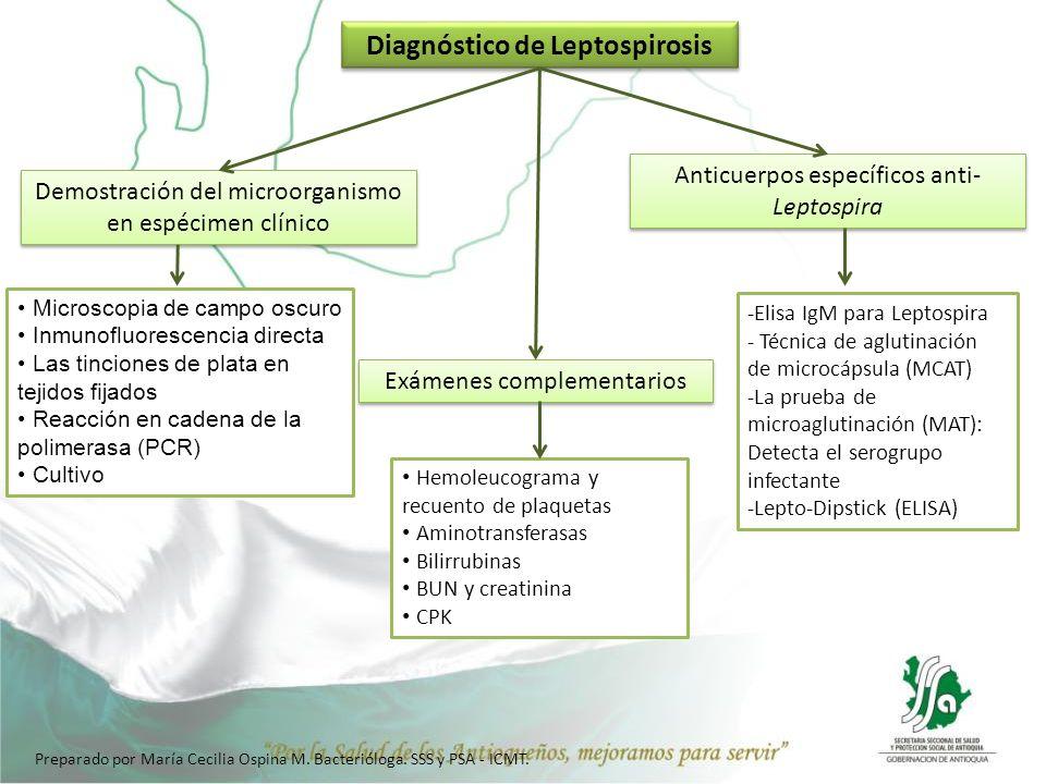 Para establecer el diagnóstico diferencial (Dengue, Hepatitis Virales, Malaria, fiebre amarilla, Meningitis asépticas, Bronconeumonías, entre otras) Ordenar la prueba de Elisa IgM para Leptospira, a los pacientes que cumplan criterio (clínica + factores de riesgo) y que tenga algunos de estos síntomas: Fiebre (38º o más), mialgias, cefalea repentina, artralgias, vómito, Náuseas, dolor retrocular, hiperemia conjuntival, secreción conjuntival, dolor en pantorrillas, diarrea, dolor abdominal, hemoptisis, melenas, epistaxis, erupción, hematuria, prueba de torniquete positiva, esplenomegalia, signos meníngeos, disnea, tos, insuficiencia respiratoria, hepatomegalia, Ictericia, insuficiencia hepática, insuficiencia renal, repentina, Insuficiencia renal, Inyección bilateral conjuntival, Neumonía, Hemorragia pulmonar, entre Otros.