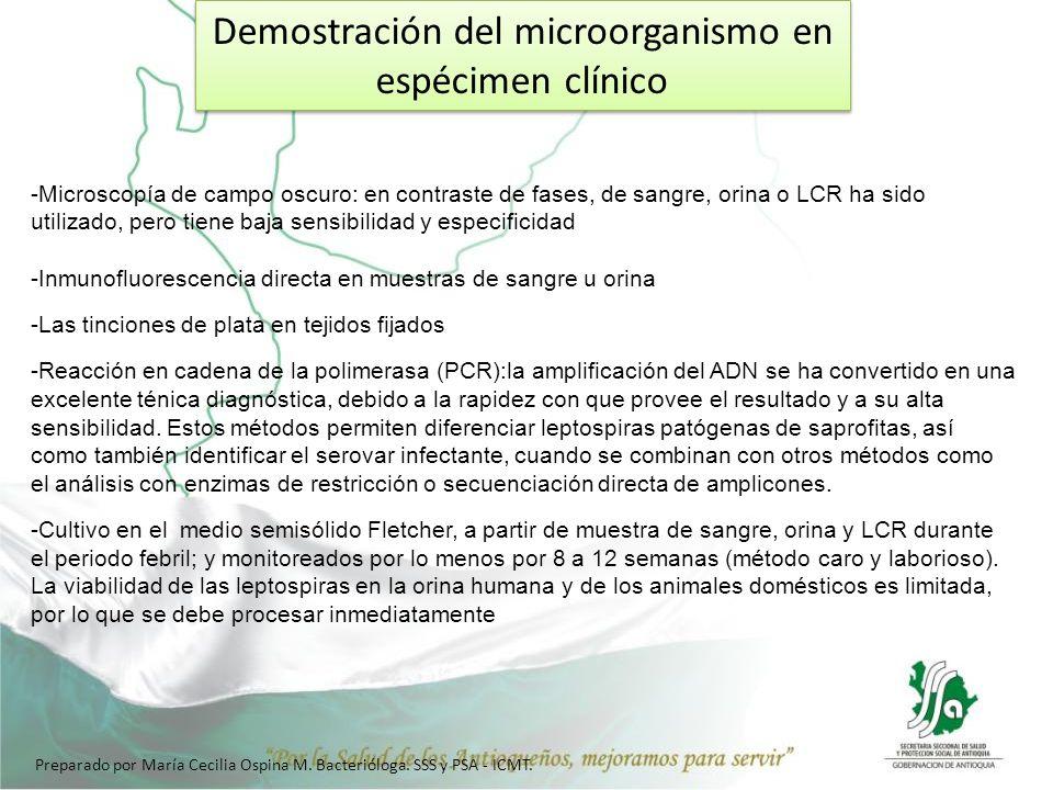 Demostración del microorganismo en espécimen clínico -Microscopía de campo oscuro: en contraste de fases, de sangre, orina o LCR ha sido utilizado, pe