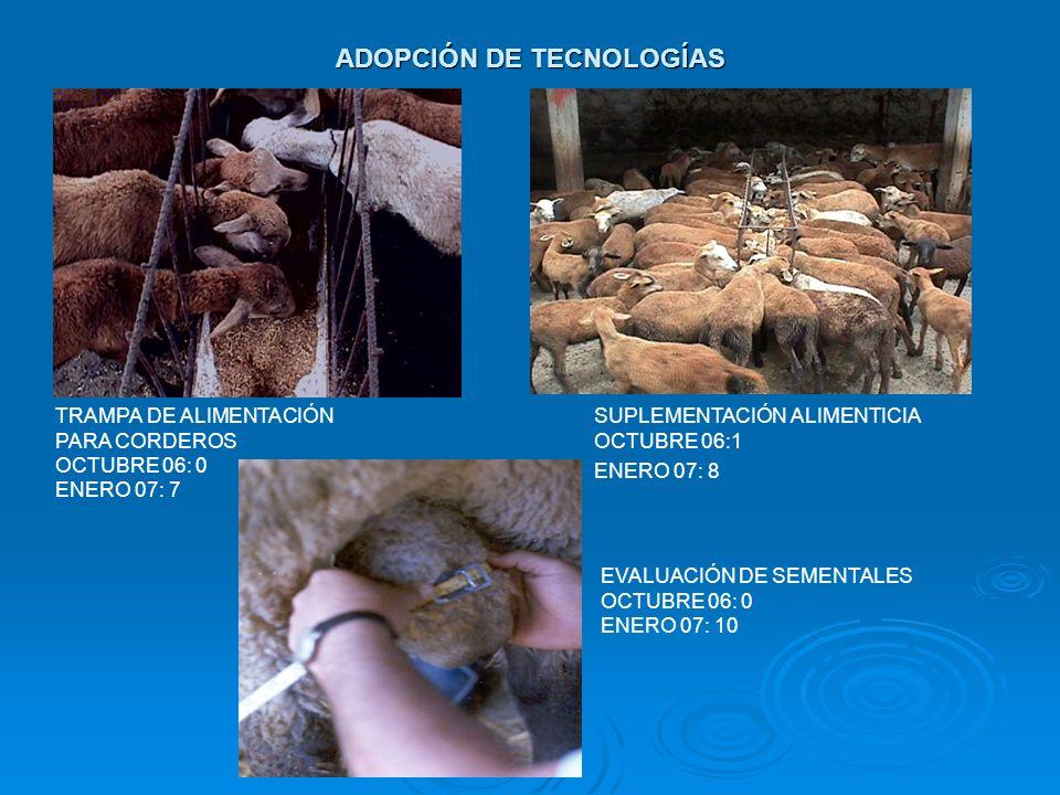 ADOPCIÓN DE TECNOLOGÍAS TRAMPA DE ALIMENTACIÓN PARA CORDEROS OCTUBRE 06: 0 ENERO 07: 7 SUPLEMENTACIÓN ALIMENTICIA OCTUBRE 06:1 ENERO 07: 8 EVALUACIÓN