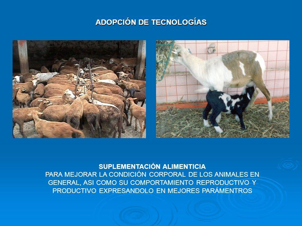 ADOPCIÓN DE TECNOLOGÍAS SUPLEMENTACIÓN ALIMENTICIA PARA MEJORAR LA CONDICIÓN CORPORAL DE LOS ANIMALES EN GENERAL, ASI COMO SU COMPORTAMIENTO REPRODUCT