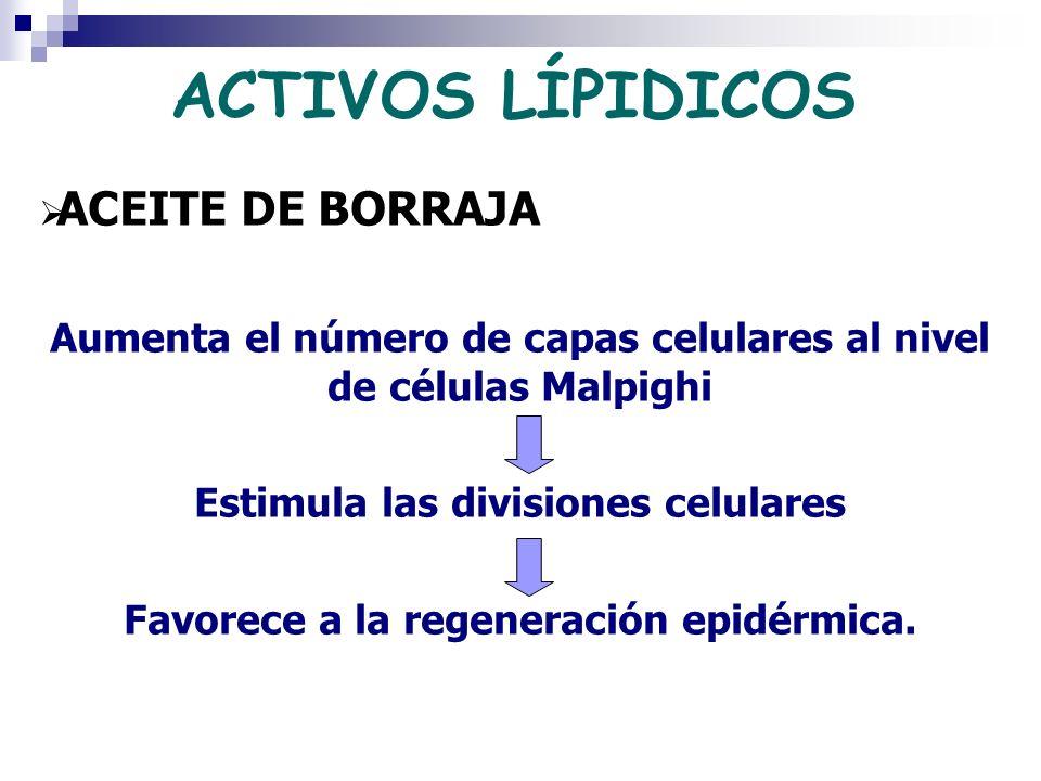 ACTIVOS LÍPIDICOS ACEITE DE BORRAJA Aumenta el número de capas celulares al nivel de células Malpighi Estimula las divisiones celulares Favorece a la