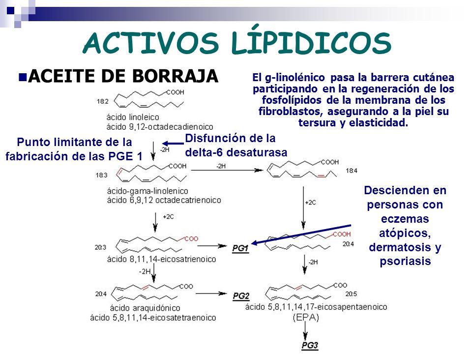 ACTIVOS LÍPIDICOS ACEITE DE BORRAJA Punto limitante de la fabricación de las PGE 1 Disfunción de la delta-6 desaturasa El g-linolénico pasa la barrera