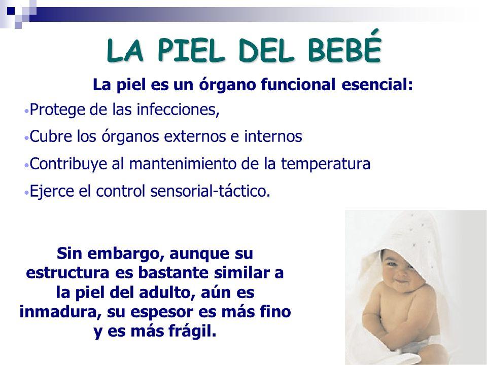 LA PIEL DEL BEBÉ La piel es un órgano funcional esencial: Protege de las infecciones, Cubre los órganos externos e internos Contribuye al mantenimient