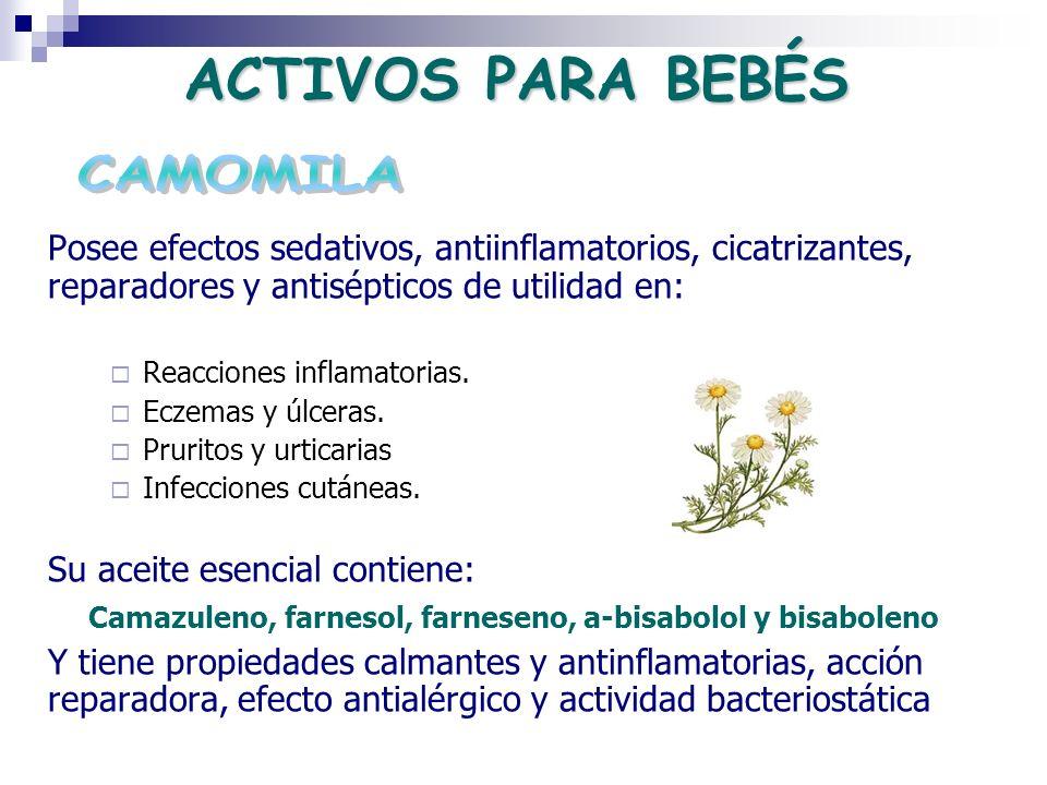 ACTIVOS PARA BEBÉS Posee efectos sedativos, antiinflamatorios, cicatrizantes, reparadores y antisépticos de utilidad en: Reacciones inflamatorias. Ecz