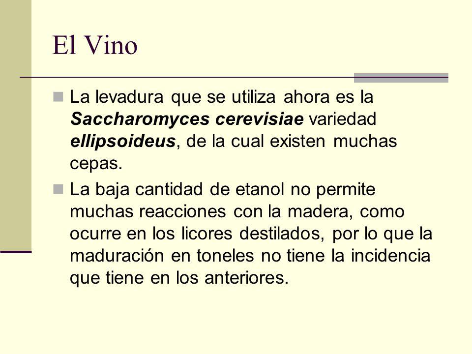 El Vino La levadura que se utiliza ahora es la Saccharomyces cerevisiae variedad ellipsoideus, de la cual existen muchas cepas. La baja cantidad de et