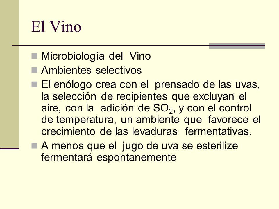 El Vino Microbiología del Vino Ambientes selectivos El enólogo crea con el prensado de las uvas, la selección de recipientes que excluyan el aire, con