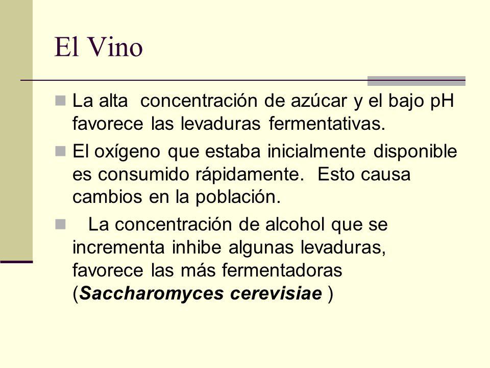 El Vino La alta concentración de azúcar y el bajo pH favorece las levaduras fermentativas. El oxígeno que estaba inicialmente disponible es consumido