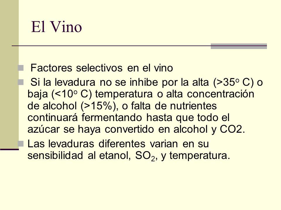 El Vino Factores selectivos en el vino Si la levadura no se inhibe por la alta (>35 o C) o baja ( 15%), o falta de nutrientes continuará fermentando h