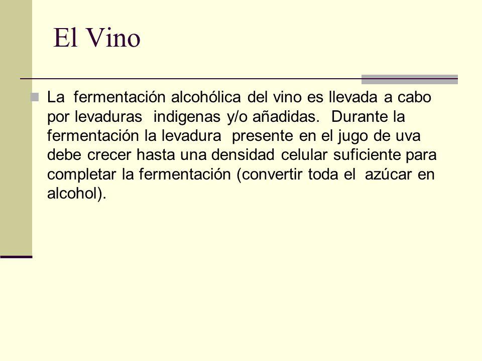 El Vino La fermentación alcohólica del vino es llevada a cabo por levaduras indigenas y/o añadidas. Durante la fermentación la levadura presente en el