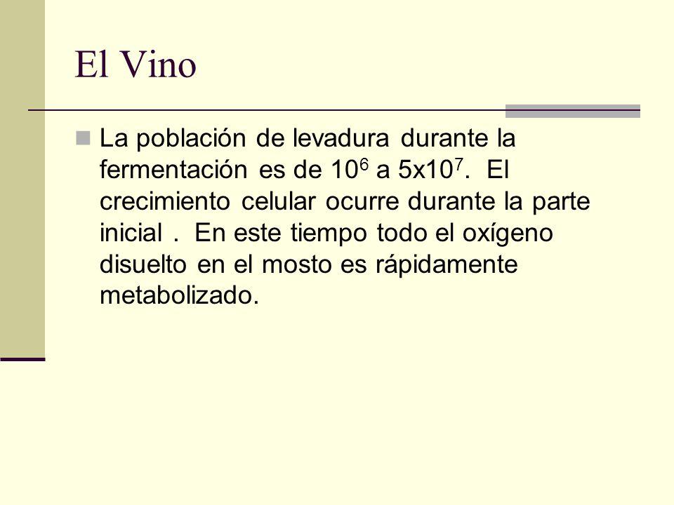 El Vino La población de levadura durante la fermentación es de 10 6 a 5x10 7. El crecimiento celular ocurre durante la parte inicial. En este tiempo t