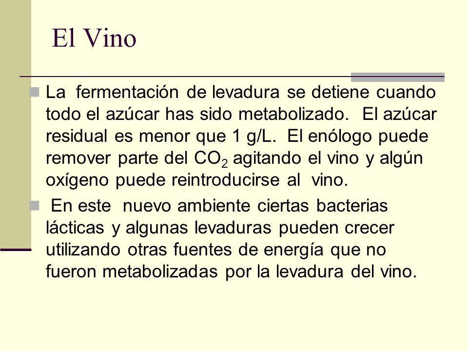 El Vino La fermentación de levadura se detiene cuando todo el azúcar has sido metabolizado. El azúcar residual es menor que 1 g/L. El enólogo puede re