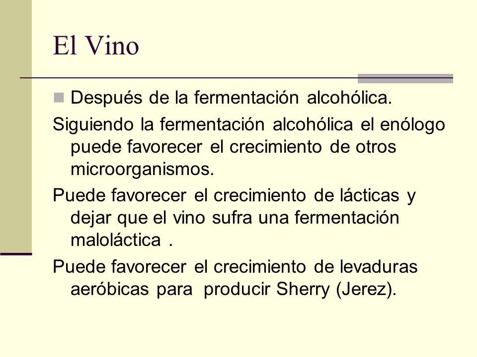 El Vino Después de la fermentación alcohólica. Siguiendo la fermentación alcohólica el enólogo puede favorecer el crecimiento de otros microorganismos