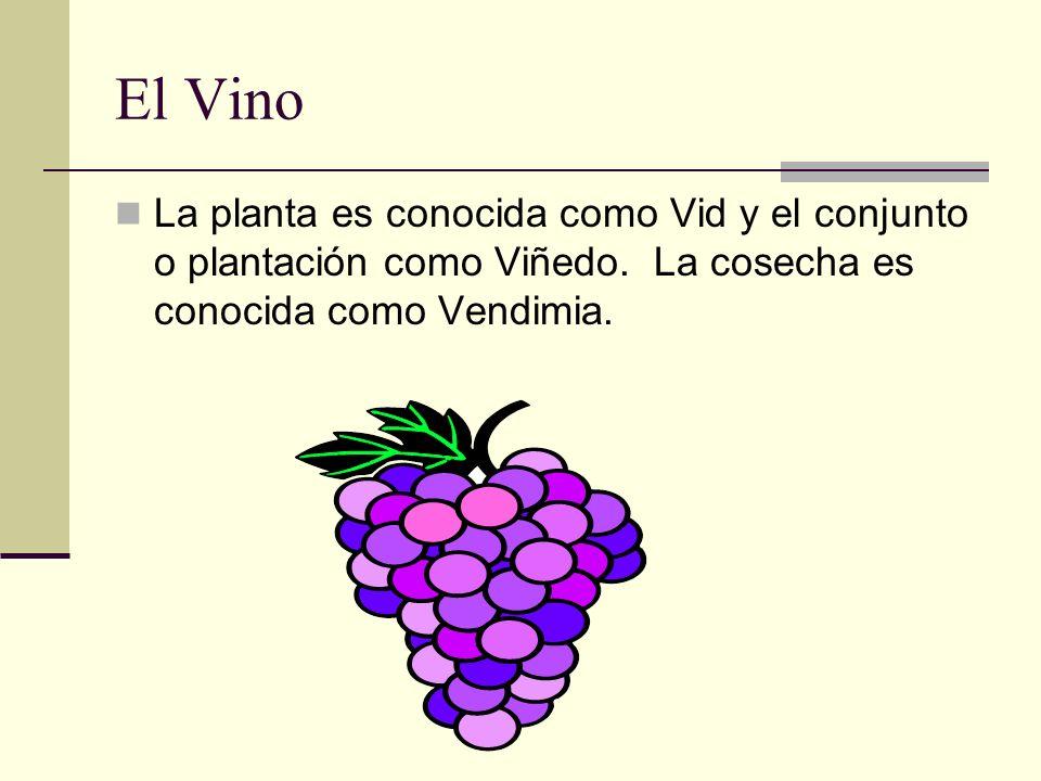 El Vino La planta es conocida como Vid y el conjunto o plantación como Viñedo. La cosecha es conocida como Vendimia.