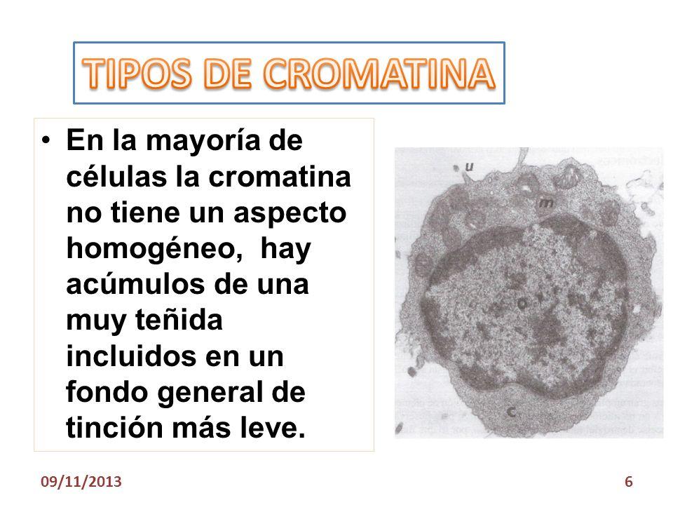 En la mayoría de células la cromatina no tiene un aspecto homogéneo, hay acúmulos de una muy teñida incluidos en un fondo general de tinción más leve.