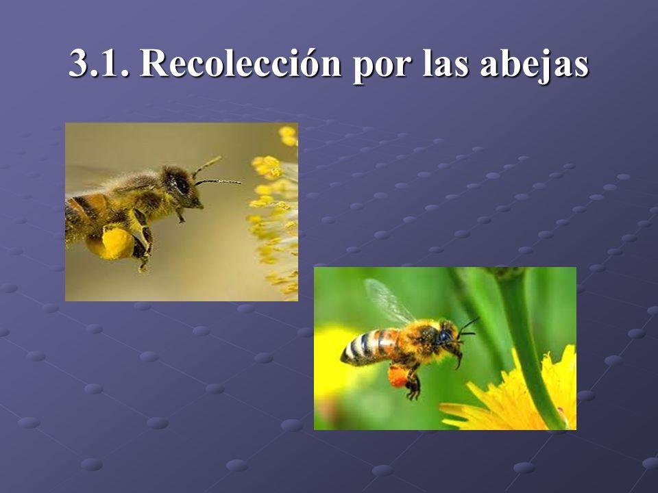 3.1. Recolección por las abejas