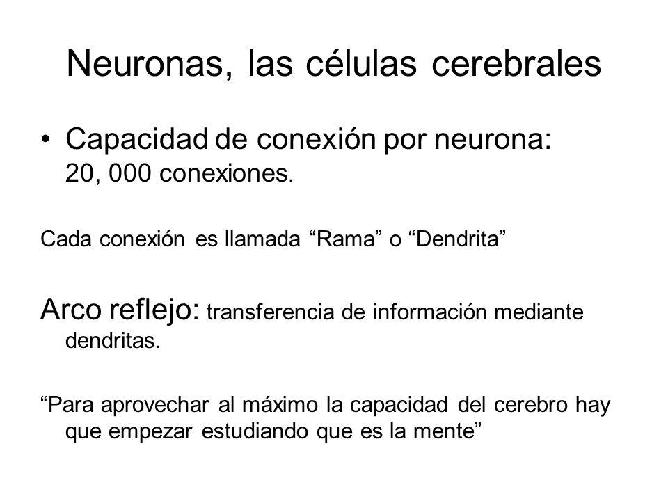 Neuronas, las células cerebrales Capacidad de conexión por neurona: 20, 000 conexiones. Cada conexión es llamada Rama o Dendrita Arco reflejo: transfe