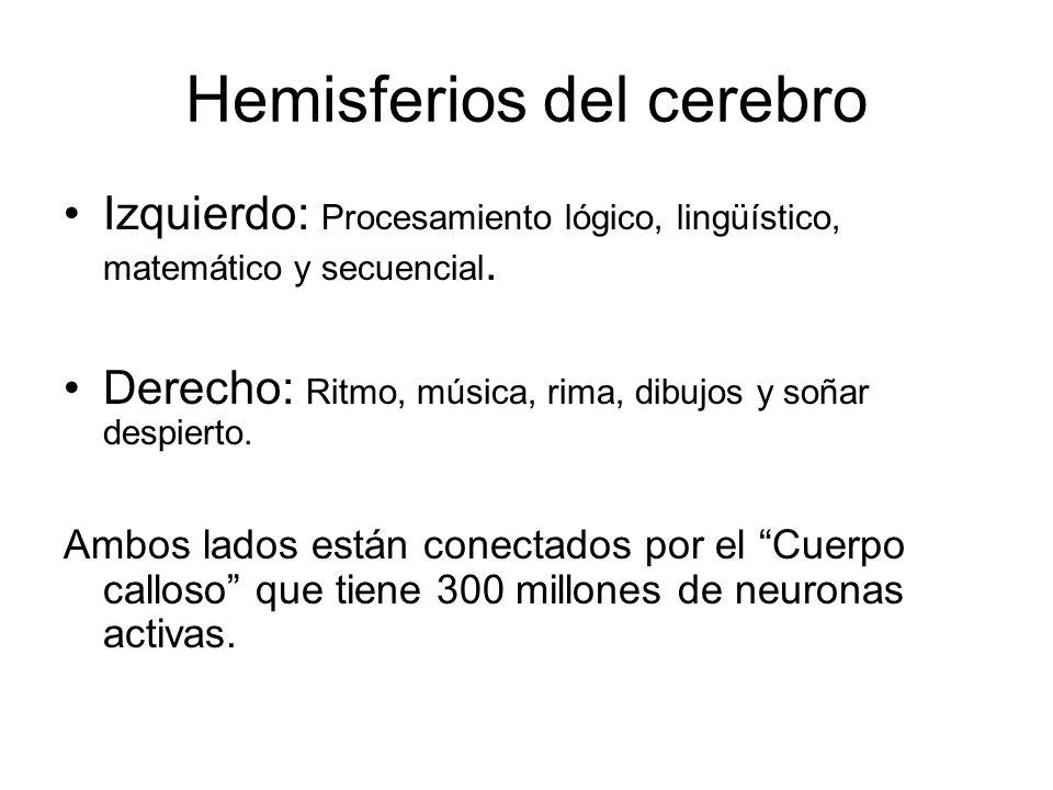 Hemisferios del cerebro Izquierdo: Procesamiento lógico, lingüístico, matemático y secuencial. Derecho: Ritmo, música, rima, dibujos y soñar despierto