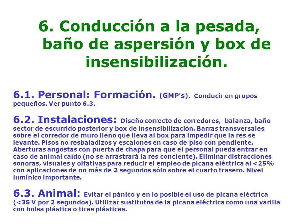 6. Conducción a la pesada, baño de aspersión y box de insensibilización. 6.1. Personal: Formación. (GMPs). Conducir en grupos pequeños. Ver punto 6.3.