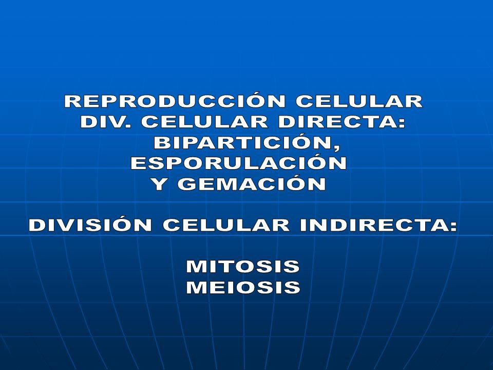 DIVISIÓN CELULAR INDIRECTA EN LA CUAL A PARTIR DE UNA CÉLULA MADRE DIPOLIDE (2n), QUE CONTIENE DOBLE JUEGO DE COMOSOMAS ( uno paterno y el otro materno), SE ORIGINA DOS (2) CÉLULAS HIJAS DIPLOIODES CON LA MISMA CANTIDAD DE INFORMACIÓN GENÉTICA QUE LA CELULA PROGENITORA