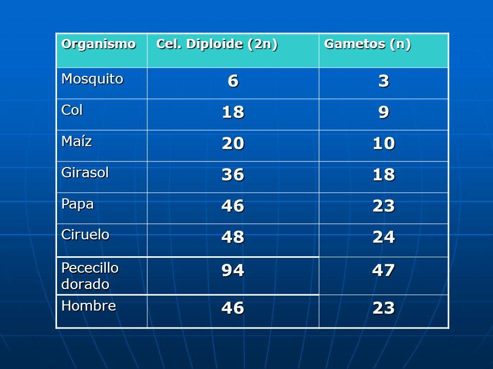 Organismo Cel. Diploide (2n) Cel. Diploide (2n) Gametos (n) Mosquito63 Col189 Maíz2010 Girasol3618 Papa4623 Ciruelo4824 Pececillo dorado 9447 Hombre46