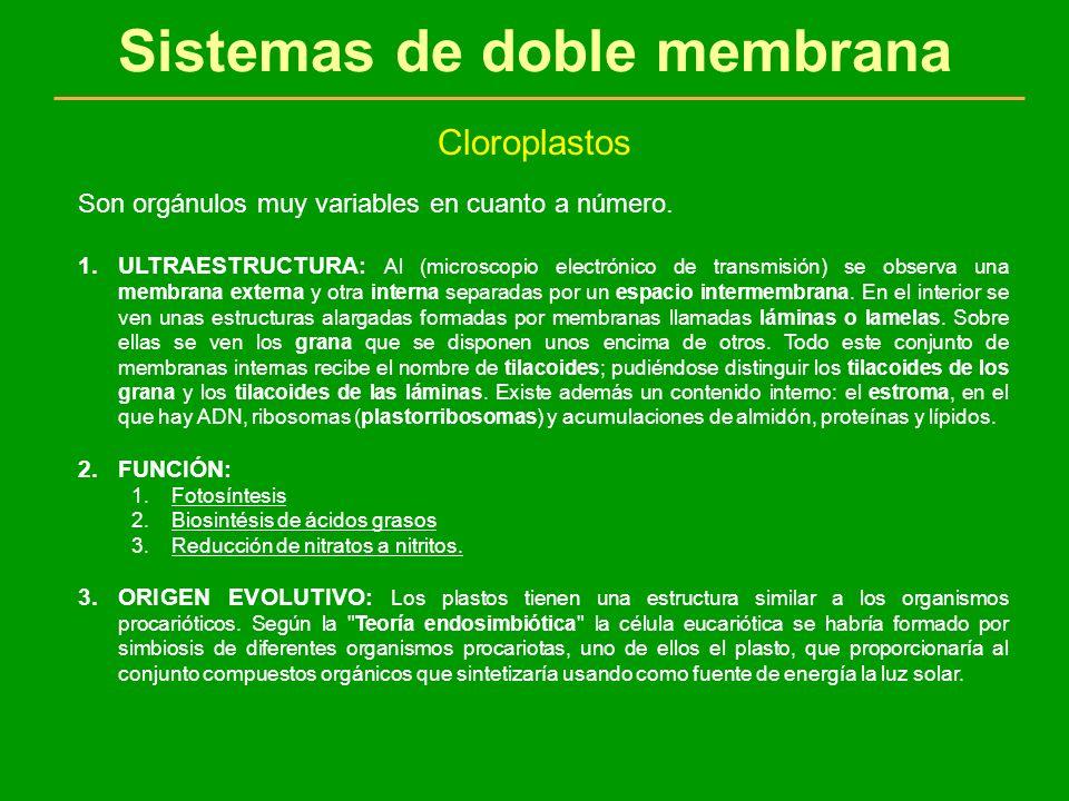 Sistemas de doble membrana Cloroplastos Son orgánulos muy variables en cuanto a número. 1.ULTRAESTRUCTURA: Al (microscopio electrónico de transmisión)