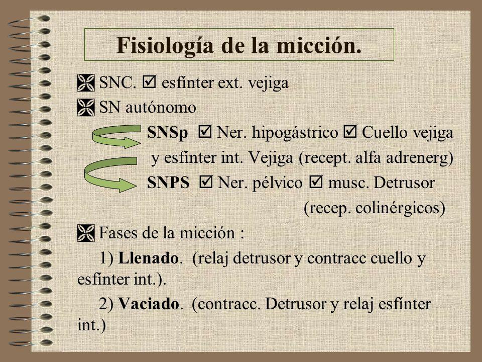 Fisiología de la micción. SNC. esfínter ext. vejiga SN autónomo SNSp Ner. hipogástrico Cuello vejiga y esfínter int. Vejiga (recept. alfa adrenerg) SN