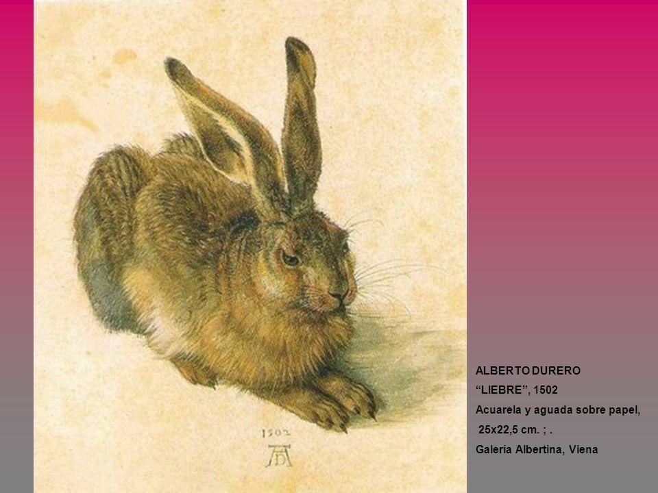 ALBERTO DURERO LIEBRE, 1502 Acuarela y aguada sobre papel, 25x22,5 cm. ;. Galería Albertina, Viena