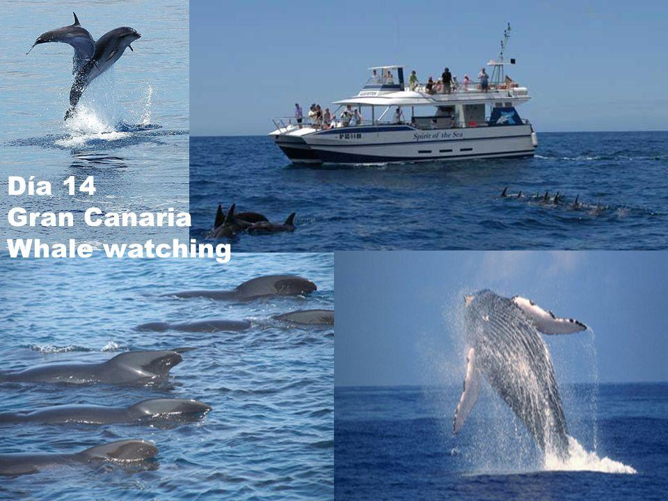 Día 14 Gran Canaria Whale watching