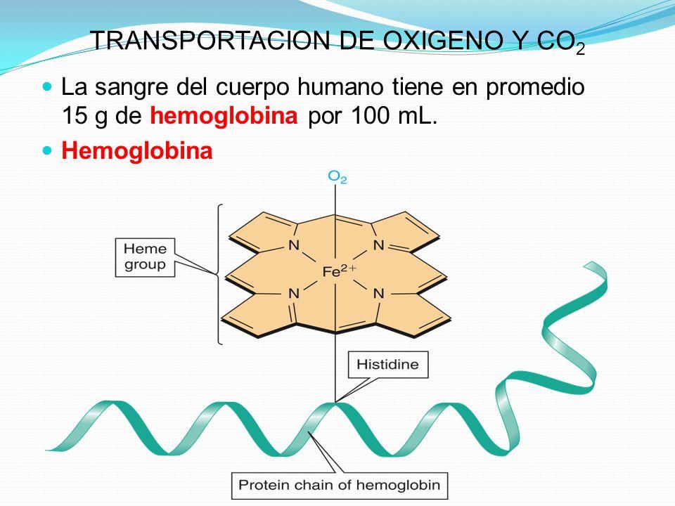 TRANSPORTACION DE OXIGENO Y CO 2 La sangre del cuerpo humano tiene en promedio 15 g de hemoglobina por 100 mL. Hemoglobina