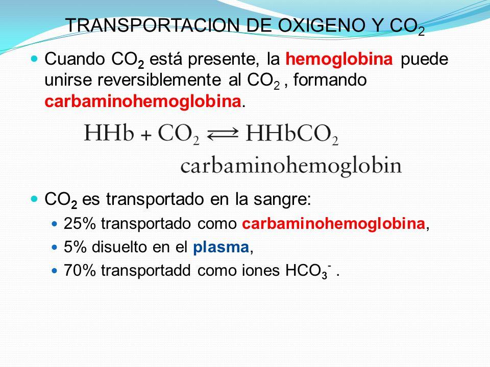 TRANSPORTACION DE OXIGENO Y CO 2 Cuando CO 2 está presente, la hemoglobina puede unirse reversiblemente al CO 2, formando carbaminohemoglobina. CO 2 e