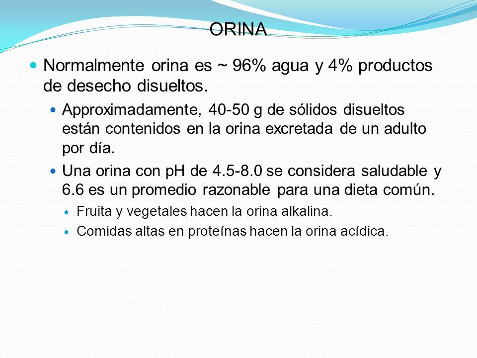 ORINA Normalmente orina es ~ 96% agua y 4% productos de desecho disueltos. Approximadamente, 40-50 g de sólidos disueltos están contenidos en la orina
