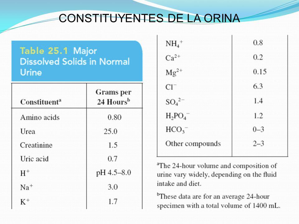 CONSTITUYENTES DE LA ORINA