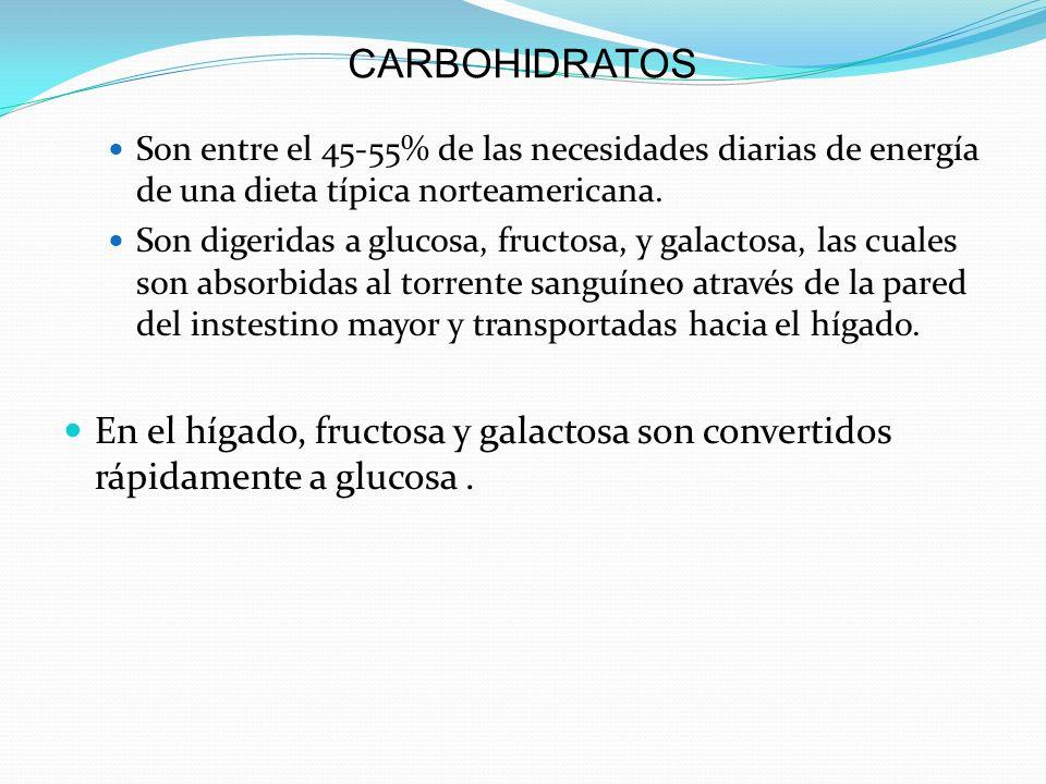CARBOHIDRATOS Son entre el 45-55% de las necesidades diarias de energía de una dieta típica norteamericana. Son digeridas a glucosa, fructosa, y galac