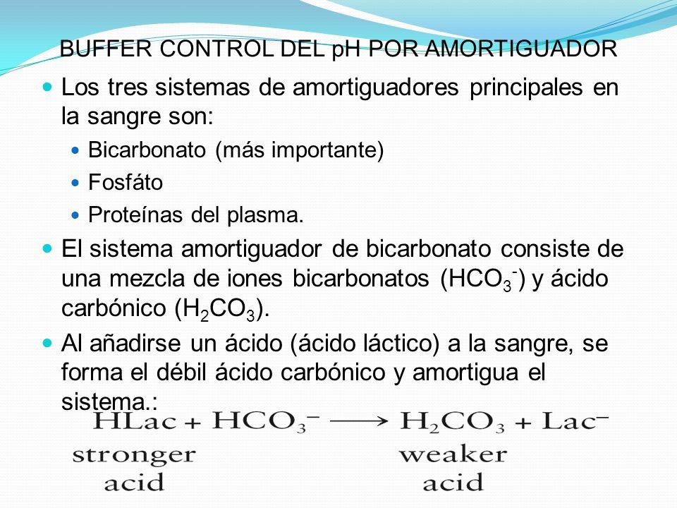 BUFFER CONTROL DEL pH POR AMORTIGUADOR Los tres sistemas de amortiguadores principales en la sangre son: Bicarbonato (más importante) Fosfáto Proteína