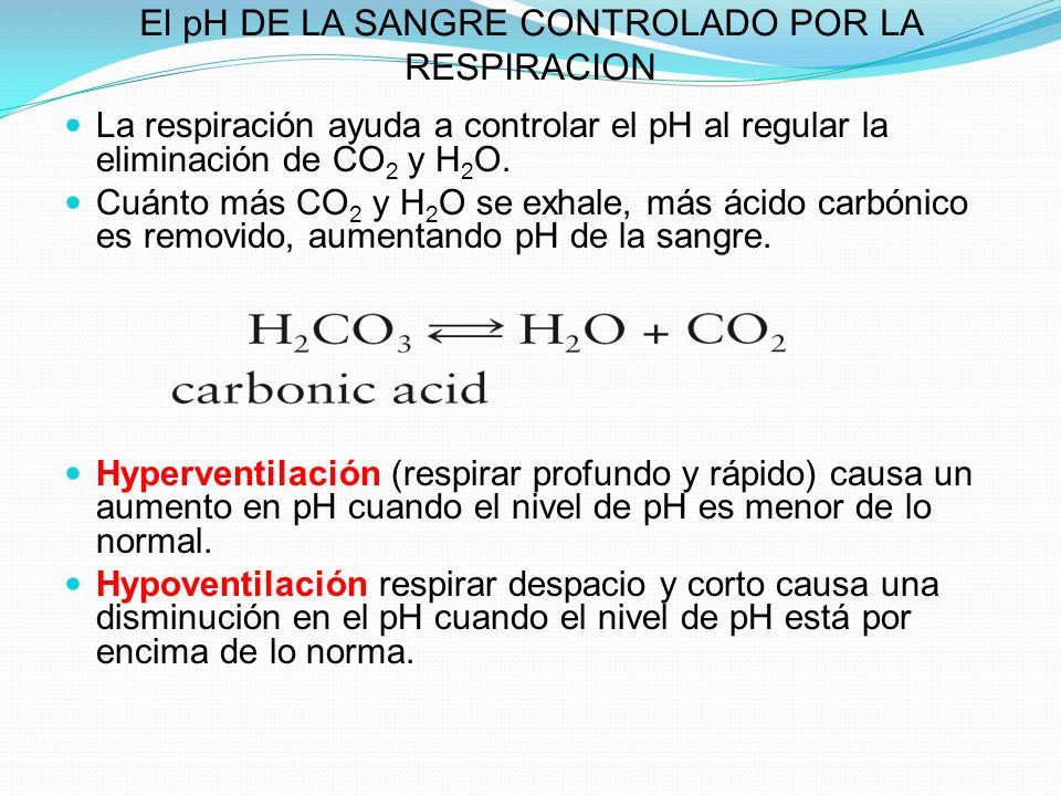 El pH DE LA SANGRE CONTROLADO POR LA RESPIRACION La respiración ayuda a controlar el pH al regular la eliminación de CO 2 y H 2 O. Cuánto más CO 2 y H
