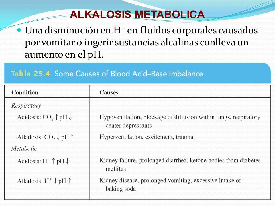 ALKALOSIS METABOLICA Una disminución en H + en fluídos corporales causados por vomitar o ingerir sustancias alcalinas conlleva un aumento en el pH.