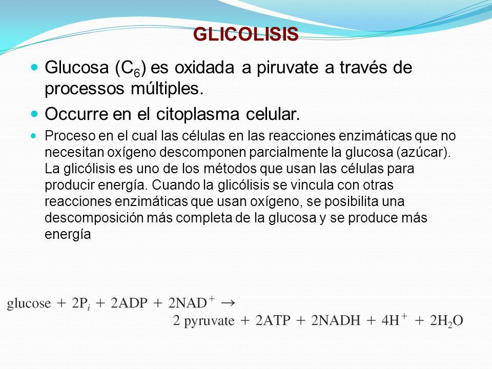 GLICOLISIS Glucosa (C 6 ) es oxidada a piruvate a través de processos múltiples. Occurre en el citoplasma celular. Proceso en el cual las células en l