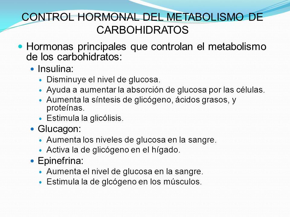 CONTROL HORMONAL DEL METABOLISMO DE CARBOHIDRATOS Hormonas principales que controlan el metabolismo de los carbohidratos: Insulina: Disminuye el nivel