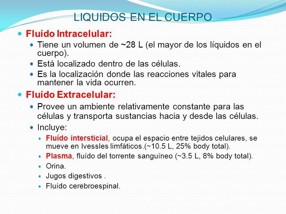 LIQUIDOS EN EL CUERPO Fluído Intracelular: Tiene un volumen de ~28 L (el mayor de los líquidos en el cuerpo). Está localizado dentro de las células. E