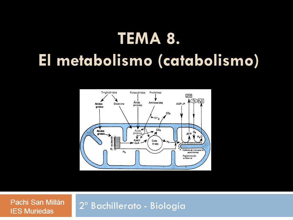 ÍNDICE: El metabolismo (catabolismo) Introducción Aspectos energéticos Catabolismo y Anabolismo Tipos de metabolismo El catabolismo: Introducción La respiración celular aerobia Degradación de los polisacáridos hasta la glucosa.