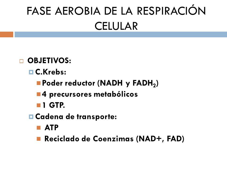 FASE AEROBIA DE LA RESPIRACIÓN CELULAR OBJETIVOS: C.Krebs: Poder reductor (NADH y FADH 2 ) 4 precursores metabólicos 1 GTP. Cadena de transporte: ATP