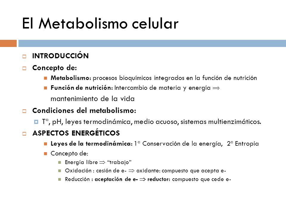 CATABOLISMO Y ANABOLISMO Catabolismo Degradación de moléculas orgánicas (Rutas convergentes) Procesos exergónicos Finalidad : ATP Poder reductor (NADPH y NADH) 12 precursores bioquímicos Catabolismo aerobio (O 2 ) y anaerobio (No O 2 ) Anabolismo Síntesis de moléculas orgánicas complejas (Rutas divergentes) Procesos endergónicos Simultaneidad y Sincronización Conservación evolutiva de las rutas centrales (análisis general) Participación de metabolitos intermediarios (Catabolismo-anabolismo): Papel de ATP/ADP (moneda o vector de energía) Papel de NADH, NADPH, FADH2 (poder reductor) Fuente indirecta de energía Fuente de materia (H+ y e- ) Para la síntesis