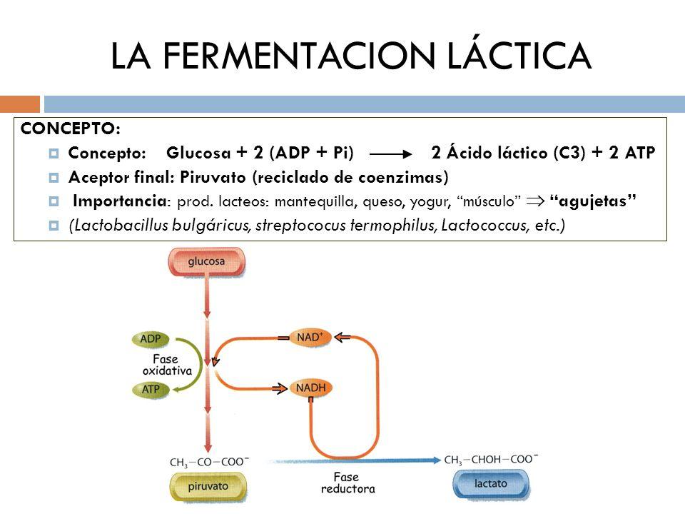 LA FERMENTACION LÁCTICA CONCEPTO: Concepto: Glucosa + 2 (ADP + Pi) 2 Ácido láctico (C3) + 2 ATP Aceptor final: Piruvato (reciclado de coenzimas) Impor