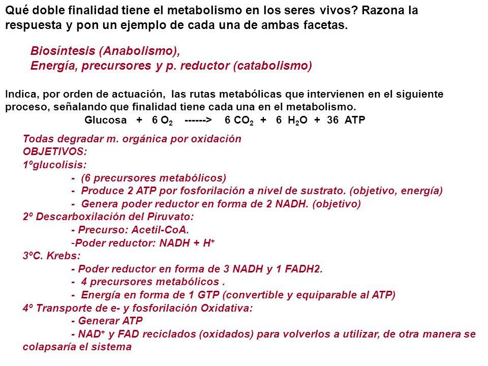 Qué doble finalidad tiene el metabolismo en los seres vivos? Razona la respuesta y pon un ejemplo de cada una de ambas facetas. Biosíntesis (Anabolism