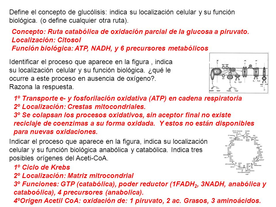 Define el concepto de glucólisis: indica su localización celular y su función biológica. (o define cualquier otra ruta). Concepto: Ruta catabólica de