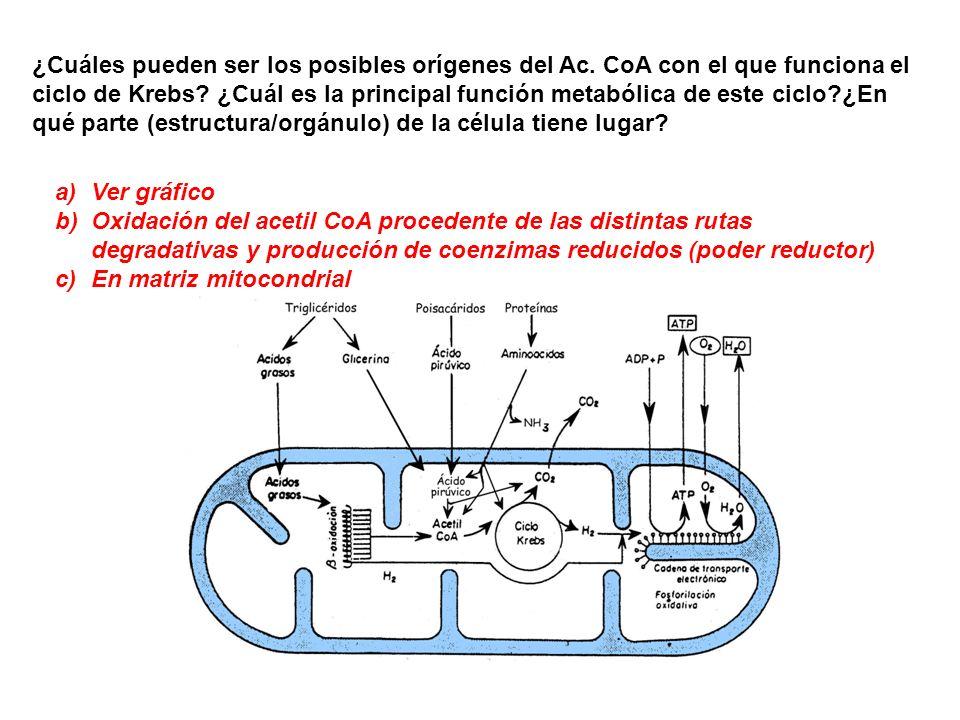 ¿Cuáles pueden ser los posibles orígenes del Ac. CoA con el que funciona el ciclo de Krebs? ¿Cuál es la principal función metabólica de este ciclo?¿En