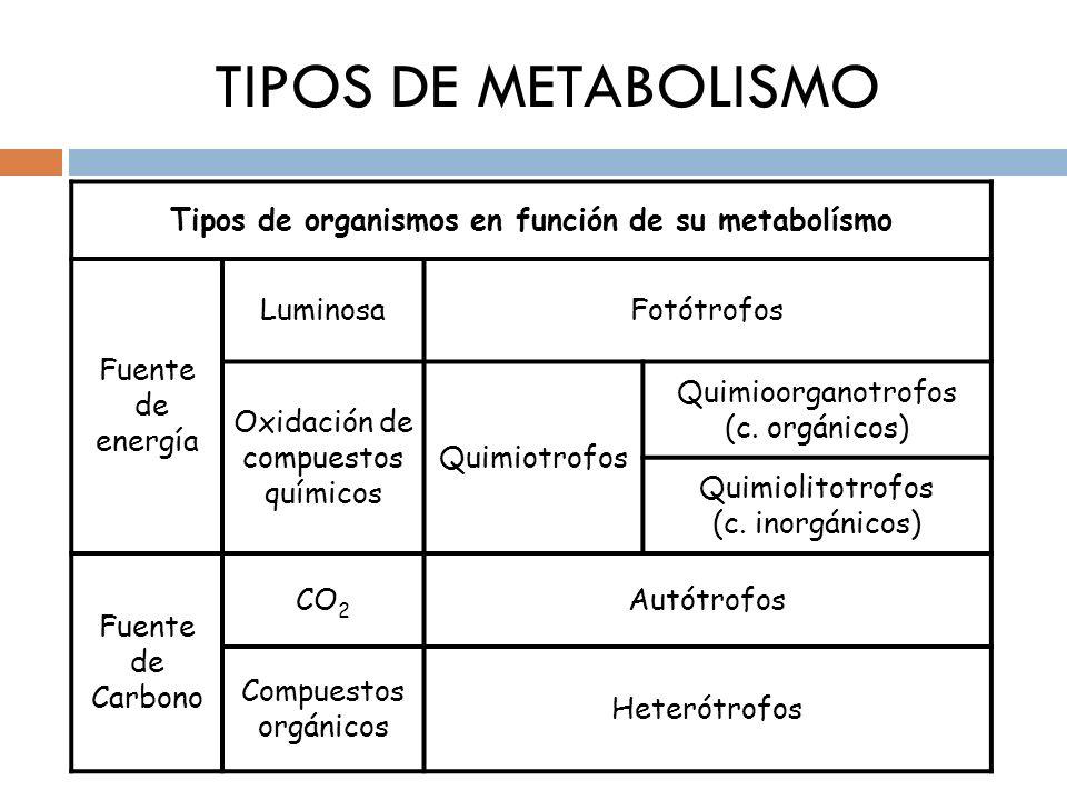 TIPOS DE METABOLISMO Tipos de organismos en función de su metabolísmo Fuente de energía LuminosaFotótrofos Oxidación de compuestos químicos Quimiotrof