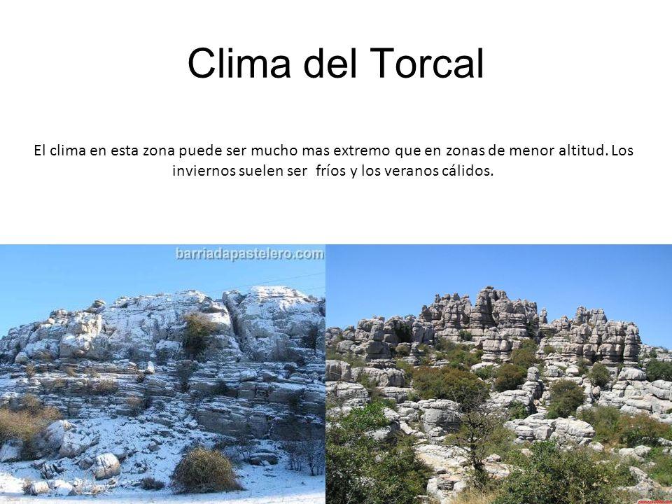 Clima del Torcal El clima en esta zona puede ser mucho mas extremo que en zonas de menor altitud. Los inviernos suelen ser fríos y los veranos cálidos