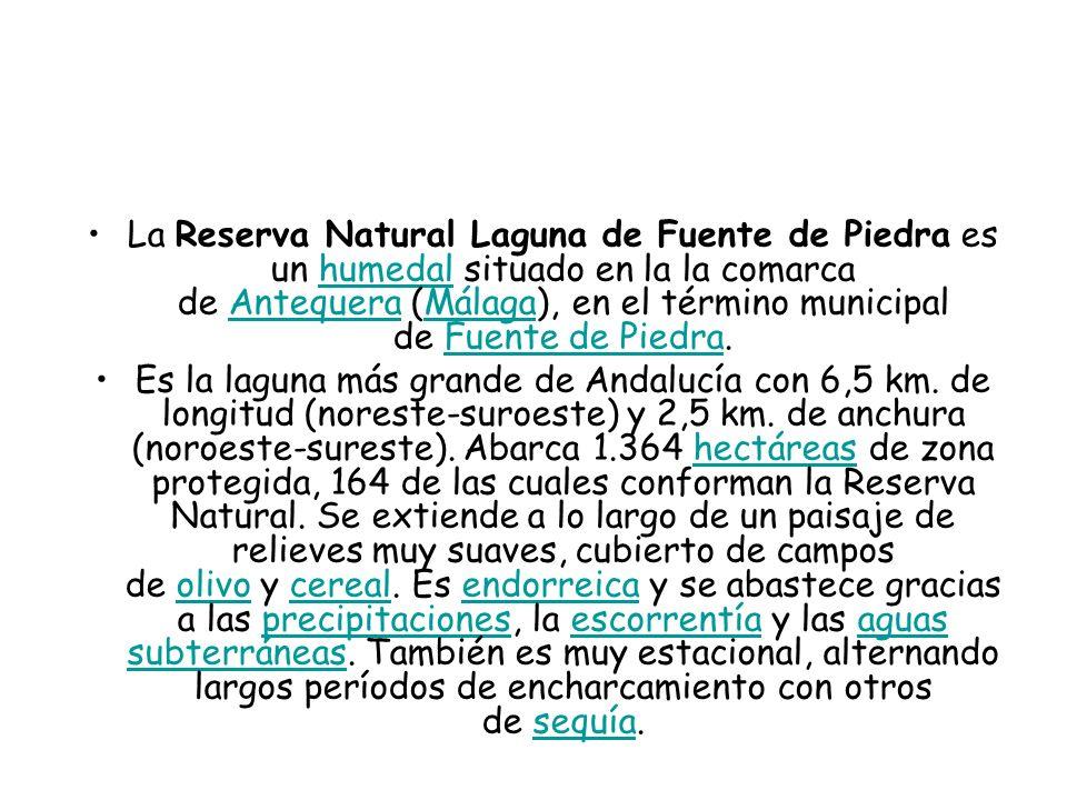 La Reserva Natural Laguna de Fuente de Piedra es un humedal situado en la la comarca de Antequera (Málaga), en el término municipal de Fuente de Piedr
