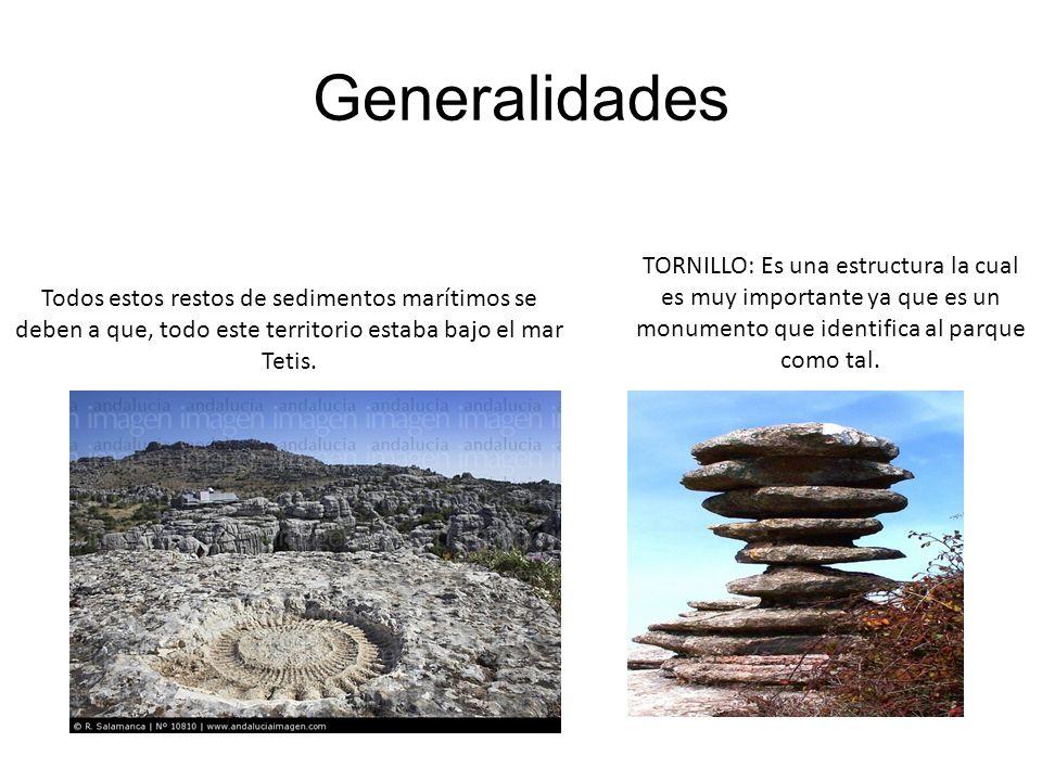 Formación del Torcal de Antequera Se originó en el Jurásico hace mas de 160 millones de años.